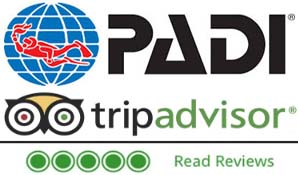 TripAdvisor 5 star reviews - Manta Manta Diving